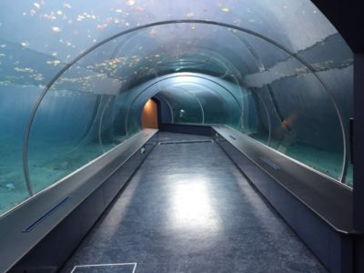 プールの下にはトンネルがあり、ホッキョクグマやアザラシが泳ぐ姿を観察できるようになっています。